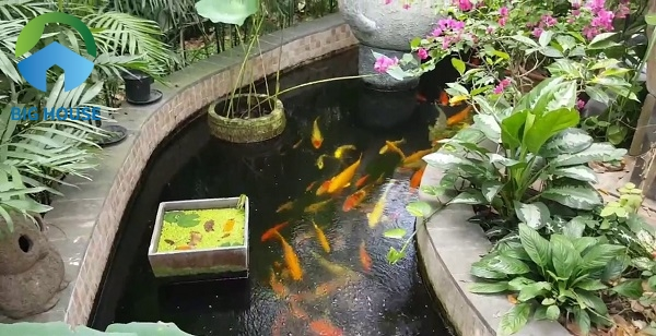 Cũng có thể sử dụng gạch mosaic đỏ hồng ấn tượng ốp bể cá koi